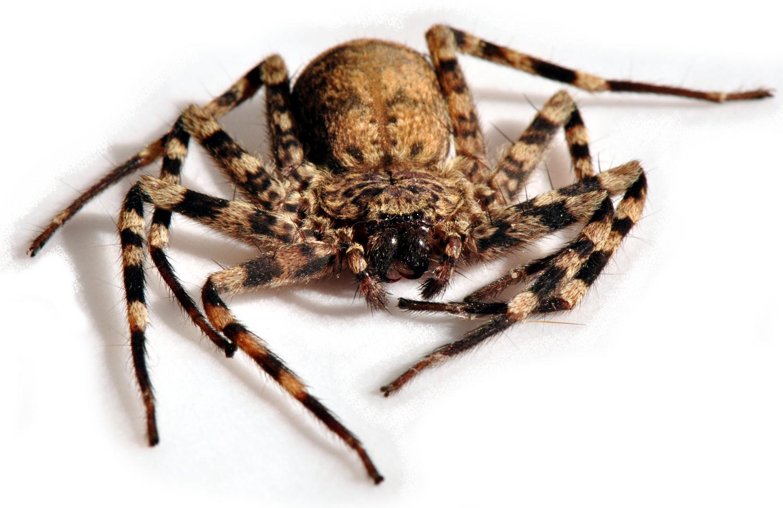 Do spiders go to heaven? | Zimbabwe Absurdity