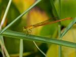 A dragonfly near a pond