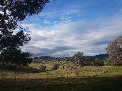 Pasture land around Orange