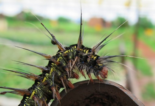 Even the caterpillars have a punk hair do