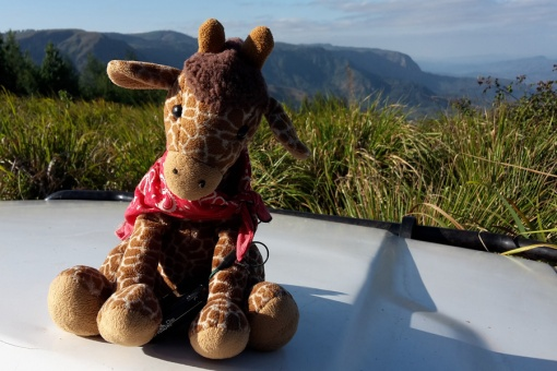 George the paragliding giraffe
