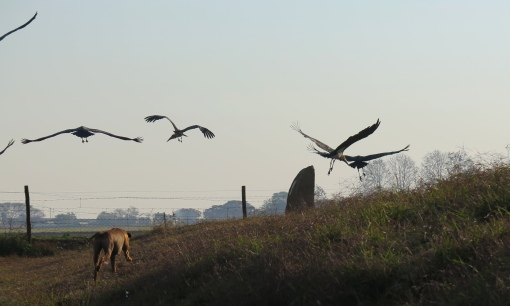 Zak sees off the local maribou storks