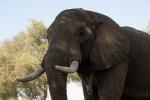 jd elephant